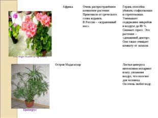 Пеларгония (герань)АфрикаОчень распространённое комнатное растение. Произо