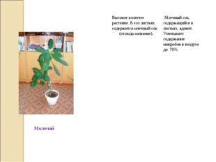 МолочайВысокое колючее растение. В его листьях содержится млечный сок (отс