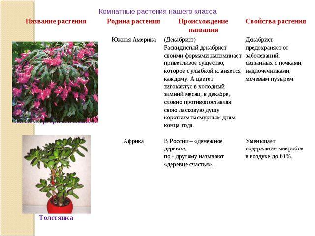 Комнатные растения нашего класса Название растенияРодина растенияПроисхожд...