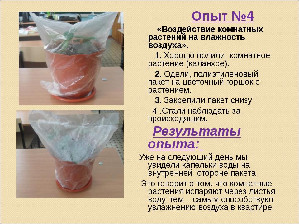 Опыт №4 «Воздействие комнатных растений на влажность воздуха». 1. Хорошо пол...