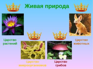 Живая природа Царство растений Царство микроорганизмов Царство грибов Царство