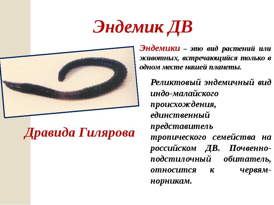 Эндемик ДВ Дравида Гилярова Эндемики – это вид растений или животных, встреча...