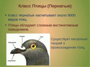 Класс Птицы (Пернатые) Класс пернатые насчитывает около 9000 видов птиц. Птиц