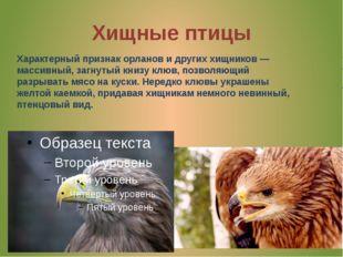 Хищные птицы Характерный признак орланов идругих хищников— массивный, загну
