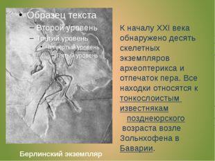 К началу XXI века обнаружено десять скелетных экземпляров археоптерикса и отп