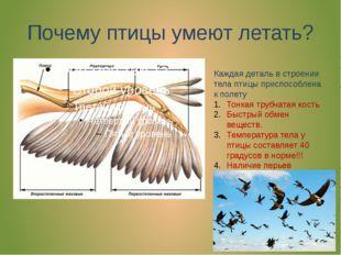 Почему птицы умеют летать? Каждая деталь в строении тела птицы приспособлена