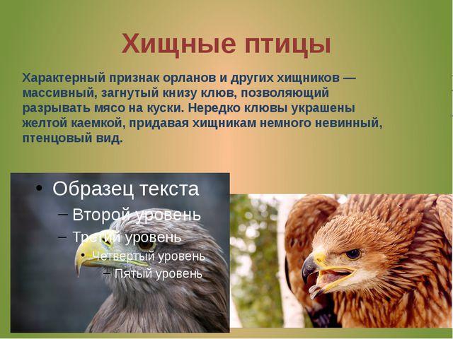 Хищные птицы Характерный признак орланов идругих хищников— массивный, загну...