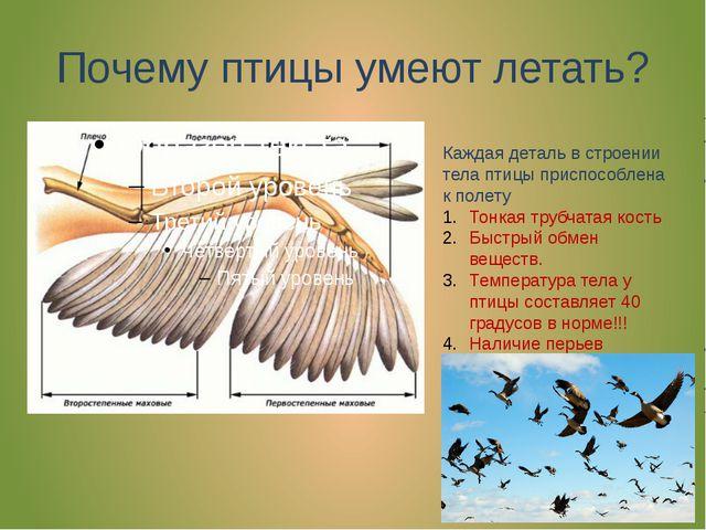 Почему птицы умеют летать? Каждая деталь в строении тела птицы приспособлена...