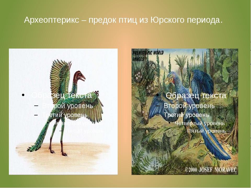Археоптерикс – предок птиц из Юрского периода.