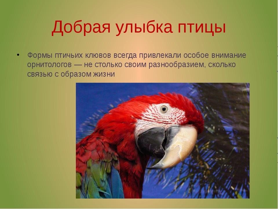 Добрая улыбка птицы Формы птичьих клювов всегда привлекали особое внимание ор...