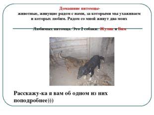 Домашние питомцы- животные, живущие рядом с нами, за которыми мы ухаживаем и