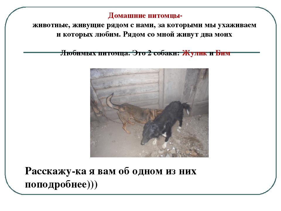 Домашние питомцы- животные, живущие рядом с нами, за которыми мы ухаживаем и...