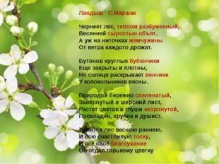 Ландыш С.Маршак Чернеет лес, теплом разбуженный, Весенней сыростью объят. А у