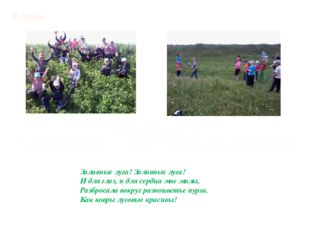 4 день Летний калейдоскоп Прогулка на луг. Ознакомление с лекарственными раст