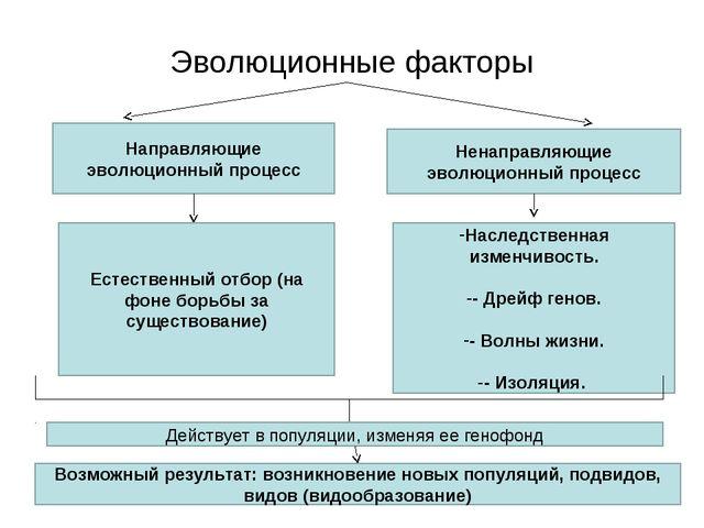 Эволюционные факторы Направляющие эволюционный процесс Ненаправляющие эволюци...