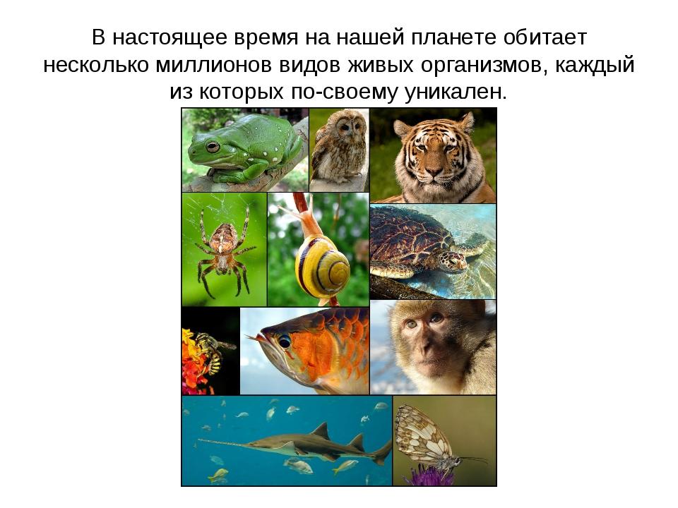 В настоящее время на нашей планете обитает несколько миллионов видов живых ор...