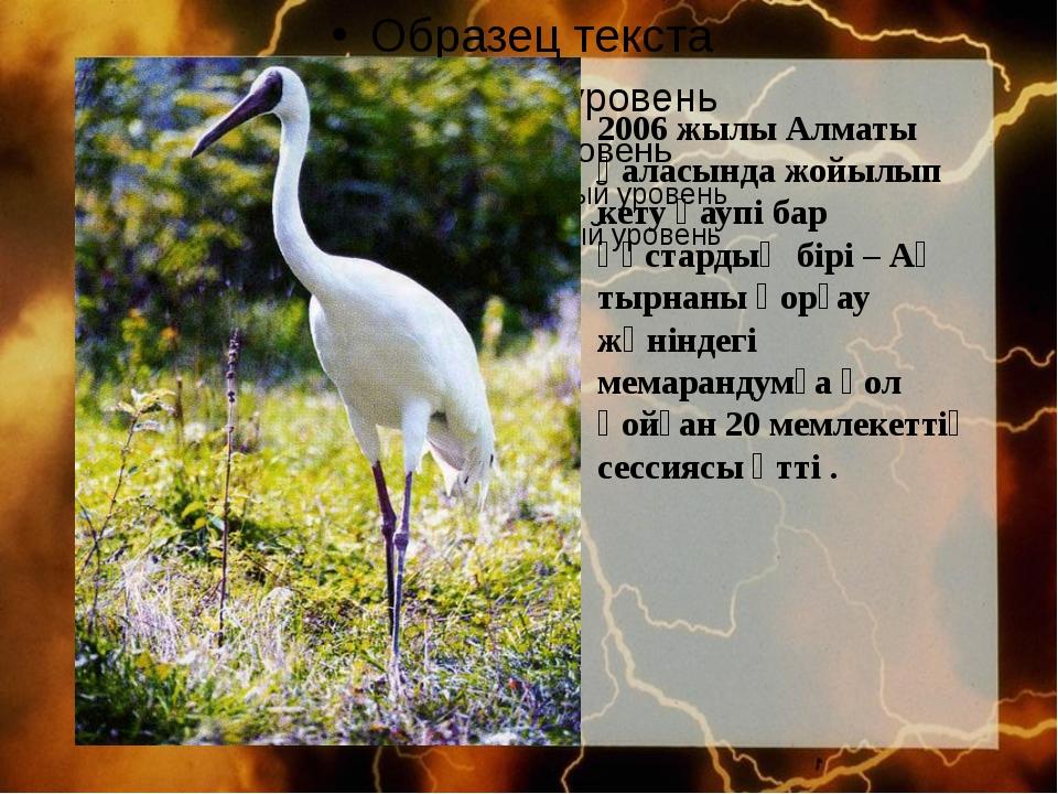 2006 жылы Алматы қаласында жойылып кету қаупі бар құстардың бірі – Ақ тырнан...