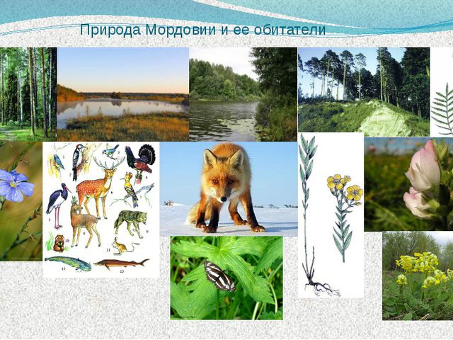 Природа Мордовии и ее обитатели