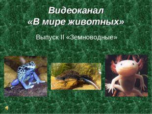 Видеоканал «В мире животных» Выпуск II «Земноводные»