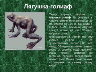 Лягушка-голиаф Самая крупная лягушка — лягушка-голиаф. Встречается в Африке.