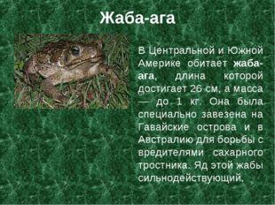 Жаба-ага В Центральной и Южной Америке обитает жаба-ага, длина которой достиг