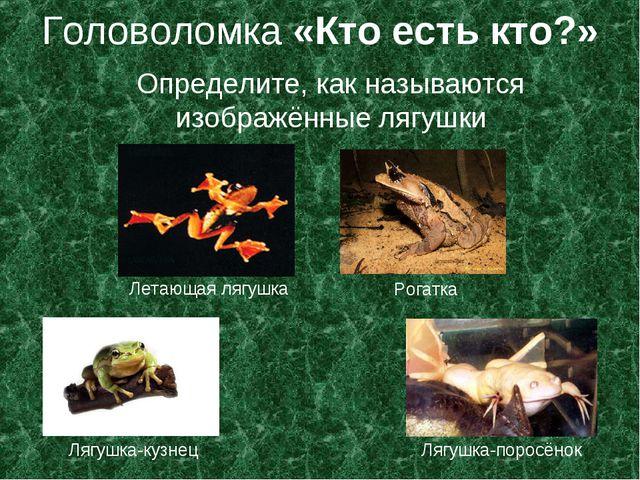 Головоломка «Кто есть кто?» Определите, как называются изображённые лягушки Л...