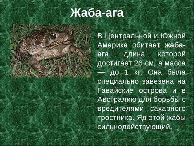 Жаба-ага В Центральной и Южной Америке обитает жаба-ага, длина которой достиг...