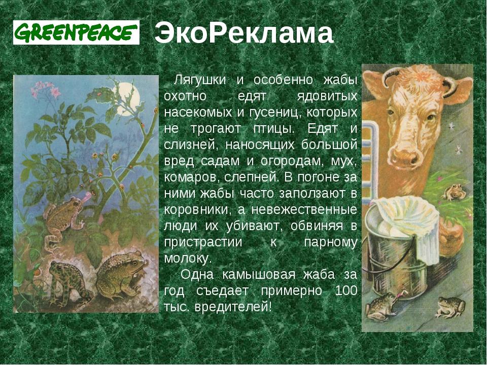 ЭкоРеклама Лягушки и особенно жабы охотно едят ядовитых насекомых и гусениц,...