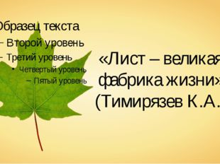 «Лист – великая фабрика жизни» (Тимирязев К.А.)
