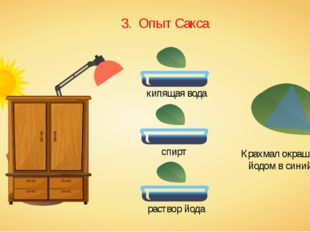 3. Опыт Сакса кипящая вода спирт раствор йода Крахмал окрашивается йодом в си