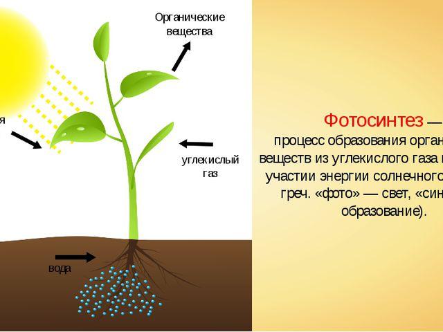 солнечная энергия углекислый газ вода Органические вещества Фотосинтез — проц...