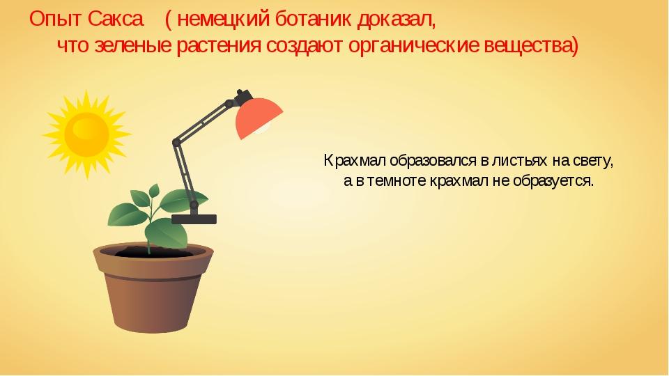 Опыт Сакса ( немецкий ботаник доказал, что зеленые растения создают органиче...
