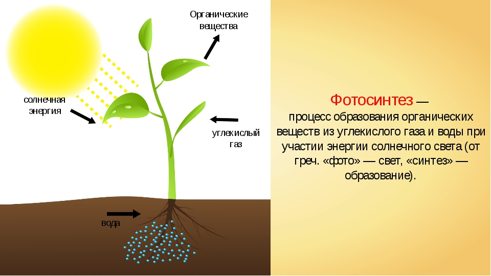 Картинки на тему фотосинтез, приятного общения инете
