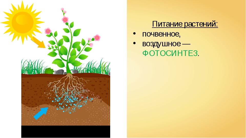 Питание растений: почвенное, воздушное — ФОТОСИНТЕЗ.