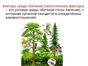 Факторы среды обитания (экологические факторы) – это условия среды обитания (