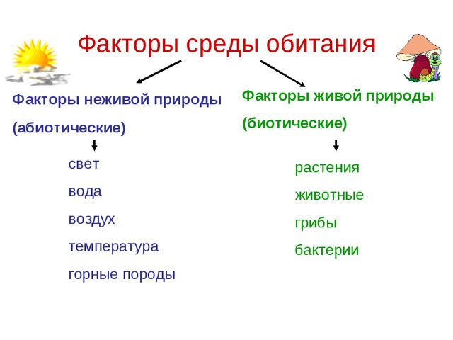 Факторы среды обитания Факторы неживой природы (абиотические) Факторы живой п...