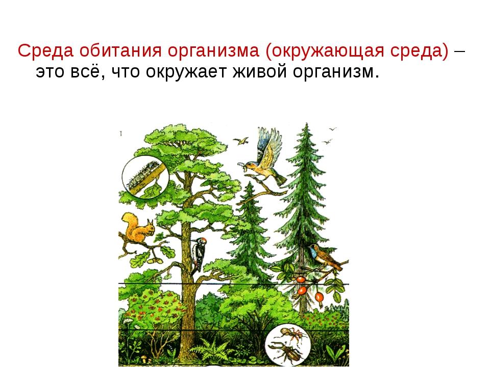 Среда обитания организма (окружающая среда) – это всё, что окружает живой орг...