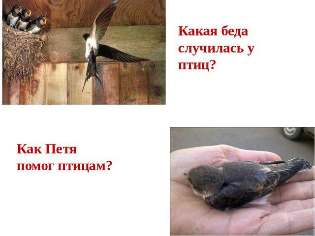Какая беда случилась у птиц? Как Петя помог птицам?