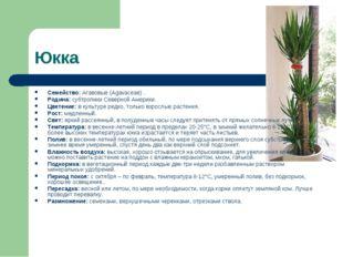 Юкка Семейство: Агавовые (Agavaceae) . Родина: субтропики Северной Америки. Ц