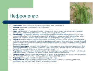 Нефролепис Семейство: Нефролеписовых (Nephrolepidaceae), или. Давалиевых Роди