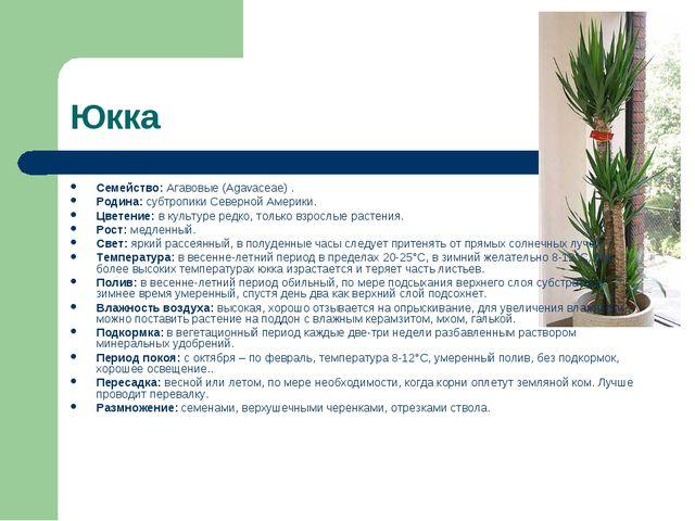 Юкка Семейство: Агавовые (Agavaceae) . Родина: субтропики Северной Америки. Ц...
