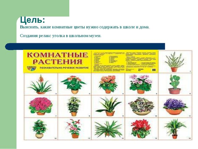 Цель: Выяснить, какие комнатные цветы нужно содержать в школе и дома. Создани...