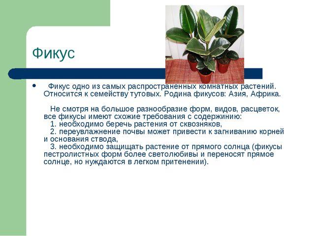 Фикус Фикус одно из самых распространенных комнатных растений. Относится к...
