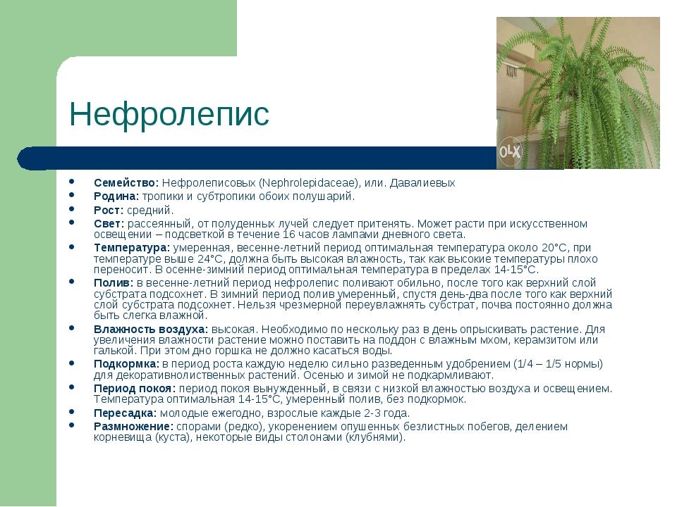 Нефролепис Семейство: Нефролеписовых (Nephrolepidaceae), или. Давалиевых Роди...