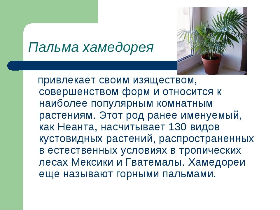 Пальма хамедорея привлекает своим изяществом, совершенством форм и относится...