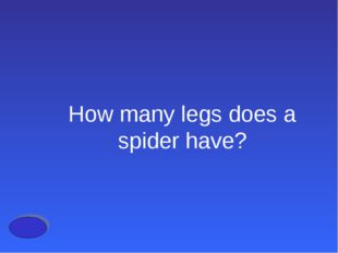 How many legs does a spider have?