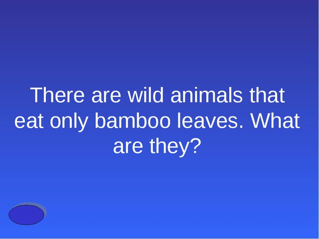 There are wild animals that eat only bamboo leaves. What are they?