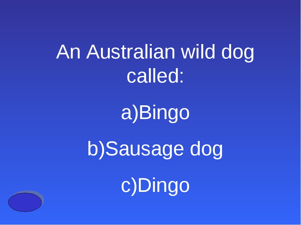 An Australian wild dog called: Bingo Sausage dog Dingo