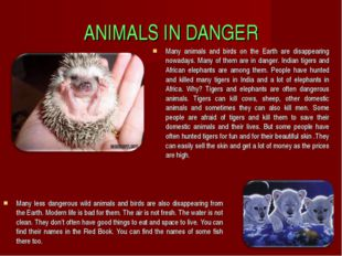 ANIMALS IN DANGER Many less dangerous wild animals and birds are also disappe