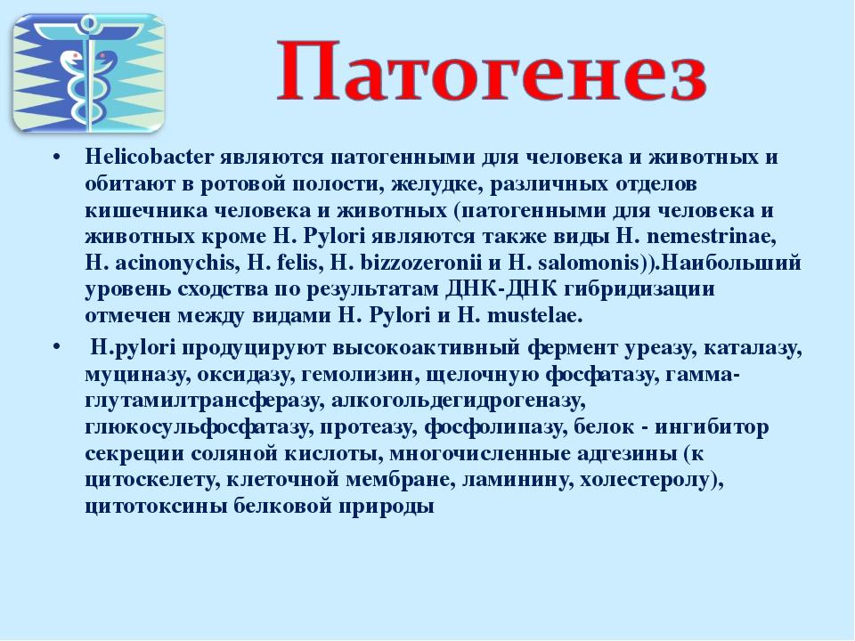 Helicobacter являются патогенными для человека и животных и обитают в ротовой...